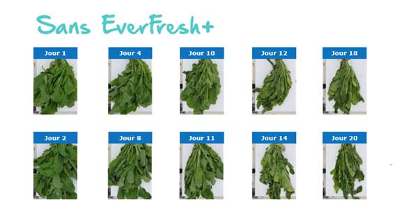 frigo pour fruits et legumes