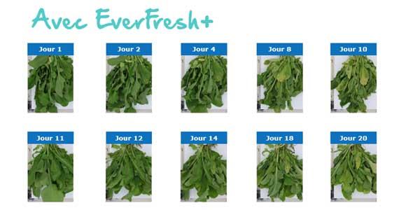 refrigerateur special legumes